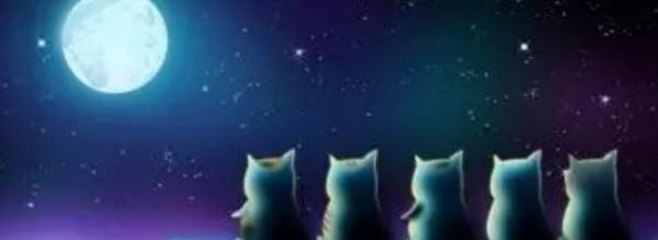 月圆之夜:如何正确打开GP和LP的宫斗剧