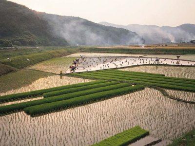 农业部再次重提农业生产托管  农产品供需基本面或将引来实质性改善